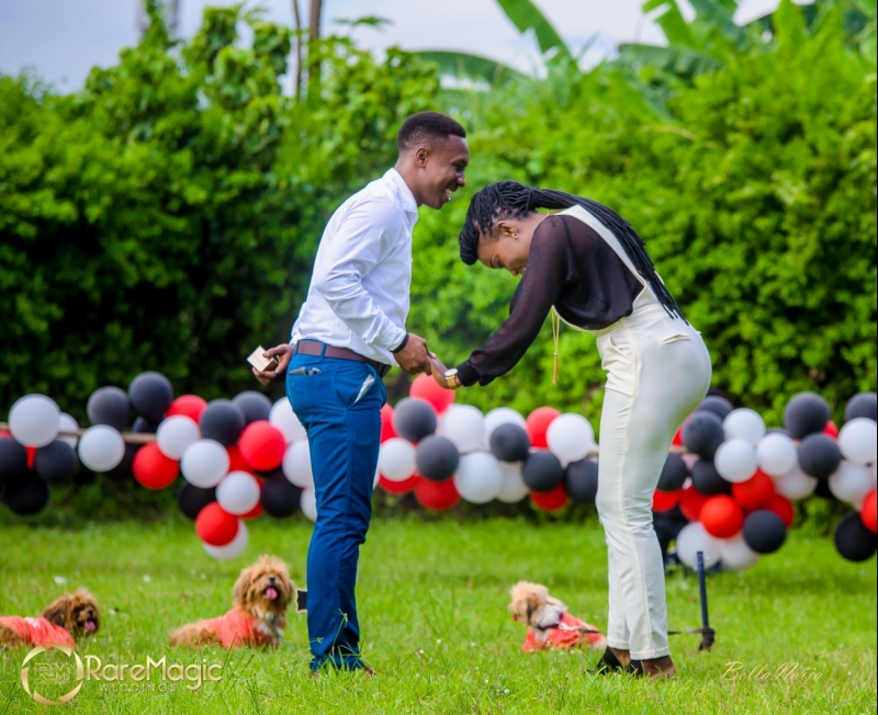 Ifeoluwapo proposes to olabanke with adorable puppies-10