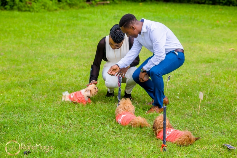 Ifeoluwapo proposes to olabanke with adorable puppies-9